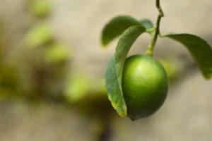 緑色の苦いレモン